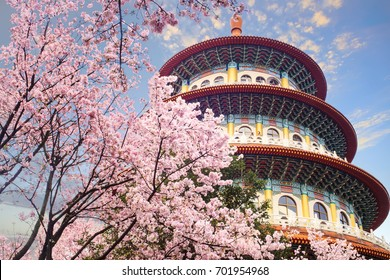 The beautiflu sakura garden with nice sky in Taipei, Taiwan