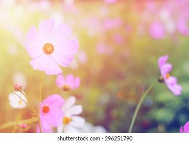 beautifu flowers vintage photo background