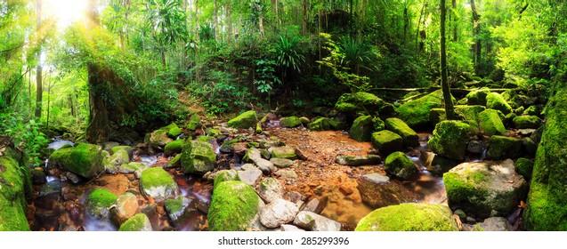 Beautiful 180 degree panorama of a stream in the rainforest jungle of the Masoala National Park in Madagascar