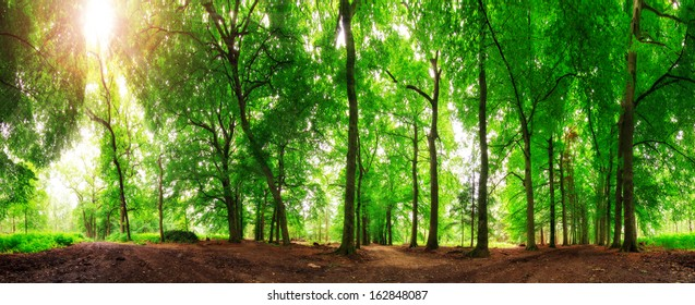 Beautiful 360 degree panorama in the forest in spring in the Netherlands