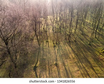 Beautiful abstract aerial drone landscape image of early morning shadows through trees in forest in the Peak District in England