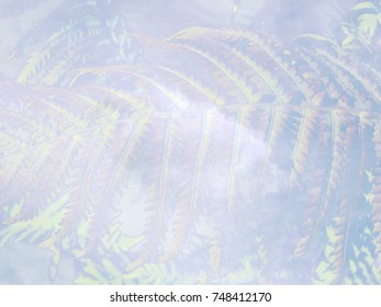 The beautiful abstract background from the fern in the City Park at autumn sunny day. The complex mixed image for the decoration of a modern smart home or packing box of perfume.