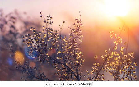 Beautiful abstract bright background, background with grass, sunny background