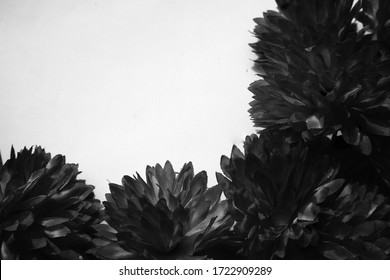 Beautiful abstract color black flowers on white background and blue graphic white flower frame and dark leaves texture, dark background, colorful graphics banner, white leaves, black leaves