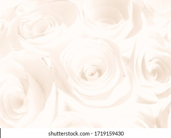 Beautiful abstract color black and yellow flowers on white background, white flower frame and brown leaves texture, brown background, orange and gold love banner, white isolated, yellow leaves