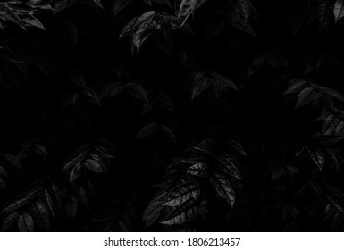 Beautiful abstract color gray and black flowers on dark background, dark leaves texture, dark background, colorful graphics banner, white leaves, black leaves