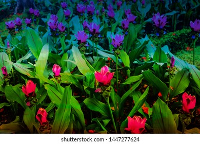 Beautiful abstract color red purple and pink flowers in the public garden parks