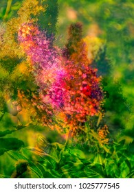 The beautiful abstract complex mixed image of the decorative bushes blooming with the purple flowers on the natural background at the City Park at the summer sunset.