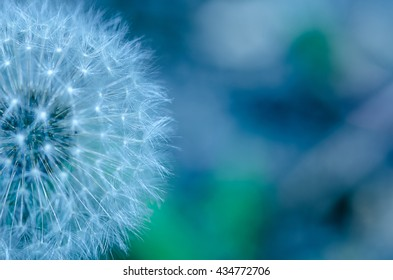 Beautiful abstract dandelion