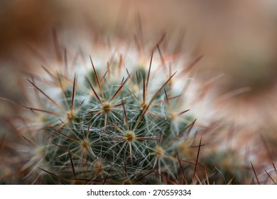Beautiful abstract floral background with soft sharp needles cactus closeup