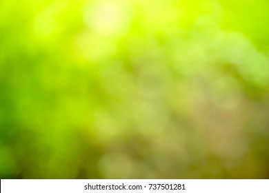Beautiful abstract green blur on natural background. Light and plant with soft bokeh. Free space for any text. Feel fresh. Can be use for brochure, web, advertising.