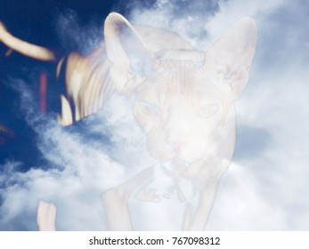 The beautiful abstract mixed image of the portrait of the cat of the Canadian Sphinx breed with the view to the clouds at the spring sunny day.