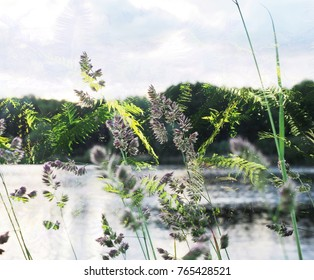 The beautiful abstract mixed image of the thicket of the fern and the blossomed grass with the view to the lake in the City Park at spring sunset.