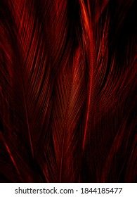 Beautiful abstract red feathers on dark background and soft white feather texture on red pattern and red background, pink feather wallpaper, love theme, wedding valentines day