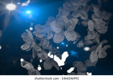 Beautiful abstract texture colorful black and white flowers and tree plant forest landscape  on the darkness and aurora Polaris on the sky background and wallpaper