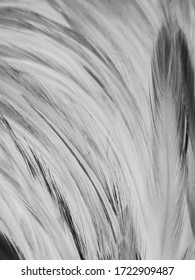 Beautiful abstract white and black feathers on white background and soft white feather texture on white pattern and dark background, gray feather background, black banners