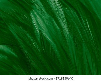 Beautiful abstract white and green feathers on white background and soft white feather texture on white pattern and green background, feather background , green banners