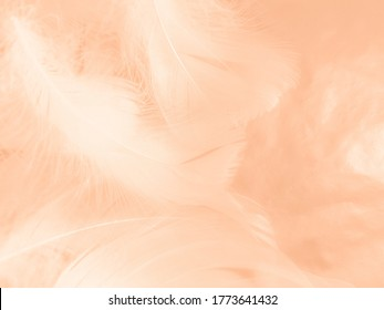 Beautiful abstract white and light orange feathers on white background, soft brown feather texture on white patter, yellow feather background