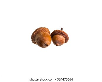 Beautiful acorn from proteins from the Ice Age