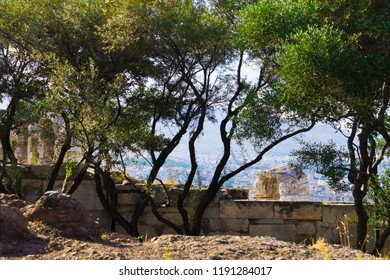 Beautiful Acropolis Trees - Greece