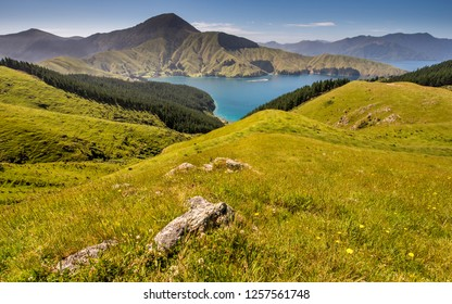 Beautiful Admiralty Bay in French Pass area, Marlborough Sounds. New Zealand nature and wilderness. Nice valley with meadow and forest. Tasman sea inlet with mountains in landscape photo background.
