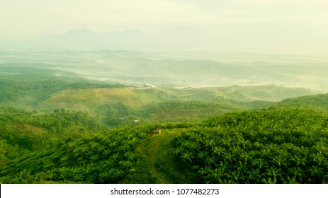 Beautiful aerial landscape of green palm oil plantation hills on misty morning at Cikidang, Sukabumi, West Java, Indonesia