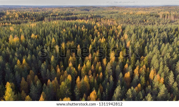 Beautiful aerial landscape picture of Finnish forest