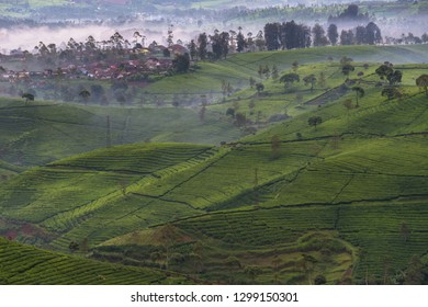Beautiful aerial scenery of tea plantaions in the morning, West Java, Indonesia