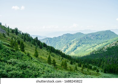 Beautiful aerial view to green forest hillside and great mountains. Awesome minimalist alpine landscape. Wonderful vivid scenery with forest mountainside. Scenic highlands nature with coniferous trees