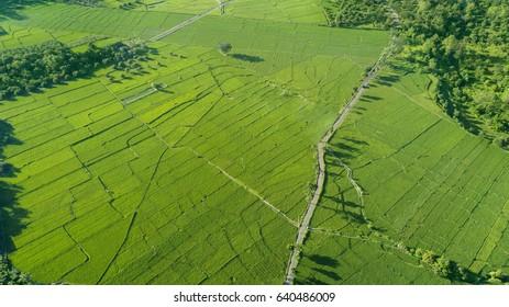 Beautiful aerial view of green paddy field in Majalengka, West Java, Indonesia