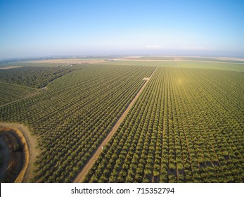 Beautiful aerial view of large almond orchard on a California farm in summer.