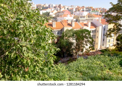 Beautiful aerial view of the old town of Lisbon in Portugal through the wall covered with lush summer foliage