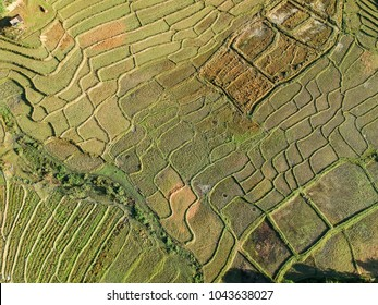Beautiful aerial view of rice fields in Thailand