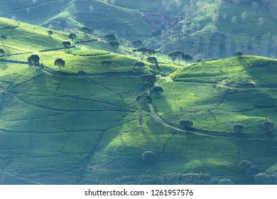 Beautiful Aerial view of tea plantation in the morning in Bandung, Indonesia