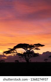Beautiful African orange sunset
