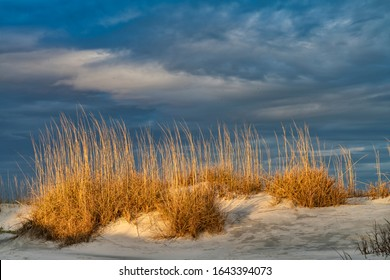Beautiful afternoon light shines on the sand dunes full of sea grass on the island of St. Helena at Hunting Island State Park near Beaufort, South Carolina.