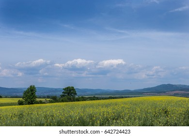 Beautiful agricultural fields and cloudy sky background