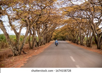 Beautiful alley with road, trees and motorbikes.