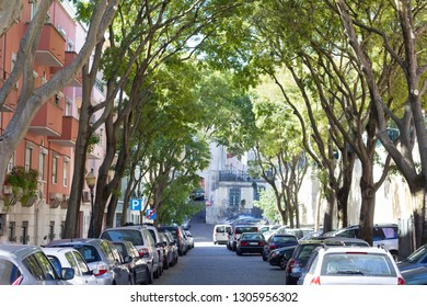 Beautiful alleyway with tall trees forming an archway with gorgeous special Lisbon light.