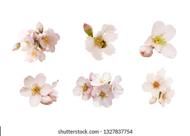 Beautiful almond flowers big set isolated on white background. Spring pink blossom in different forms, bee and buds. Tender flowers isolated.