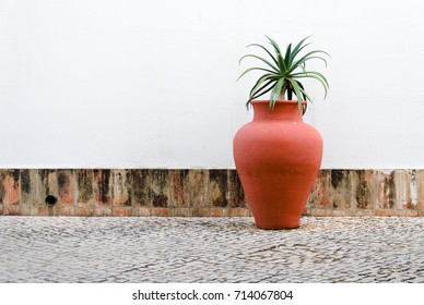 Beautiful Aloe Vera in a decorative pot