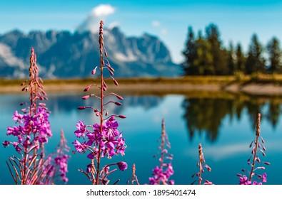 Beautiful alpine flowers at the famous Hartkaiser summit, Ellmau, Wilder Kaiser, Tyrol, Austria - Shutterstock ID 1895401474