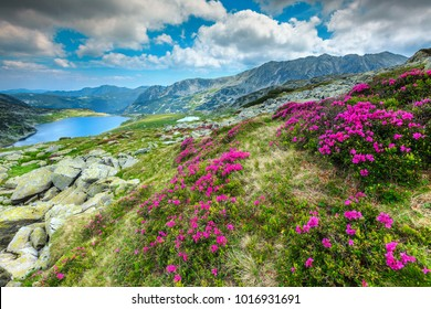 Beautiful alpine glacier lake, high mountains, cloudy sky and wonderful pink rhododendron flowers, Retezat National Park, Carpathians, Romania, Europe