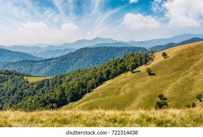 beautiful alpine grassy meadow in Carpathians. autumnal sunny weather with gorgeous cloudscape above mountains with forest on hillside