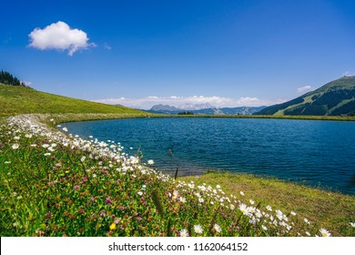 Beautiful alpine lake with white daisy flowers on green grass meadow. Blue sky and white cloud, mountain alpine landscape in the background. Alpine lake and daisy lawn, Saalbach Hinterglemm, Austria.