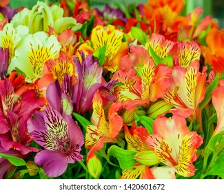 Beautiful alstroemeria flower background.