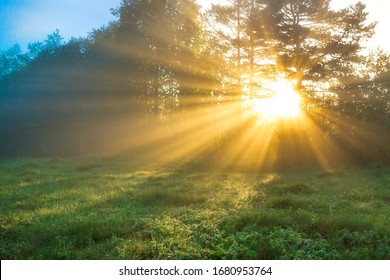 beautiful amazing landscape with sun and forest and meadow at sunrise. sun rays shine through trees