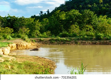 beautiful amazing scene of one large wild elephant is standing and is going to swim in a large pool inside a national park with blue sky and cloud.