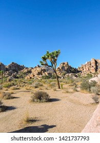 Beautiful american with green joshua tree national park.USA. California. American landmark. Joshua tree landscape.