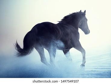 Beautiful American Quarter Horse action portrait in snow